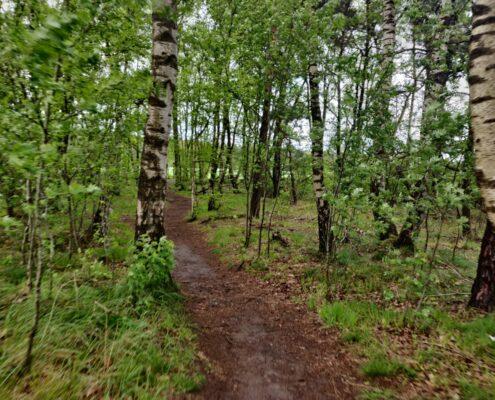 bos bij bergvennen in Lattrop