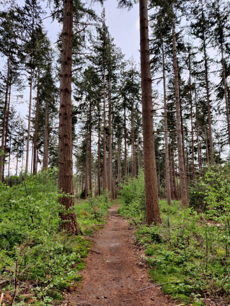 bos bij Eelerberg